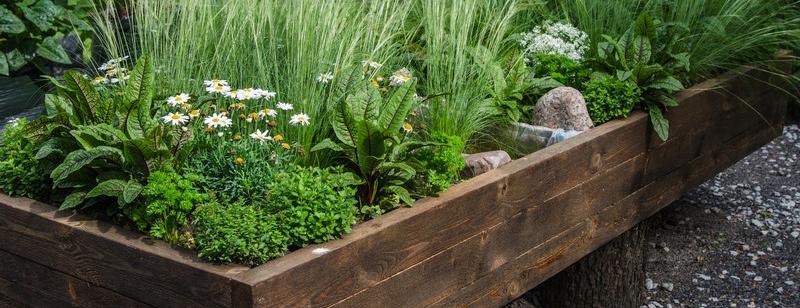 création massif de plantes